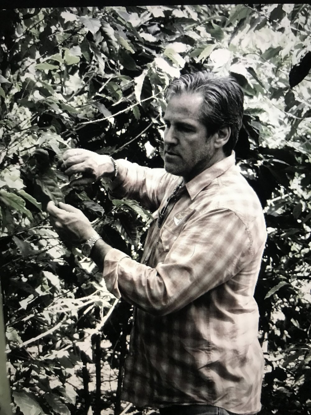 sourcing coffee in costa rica