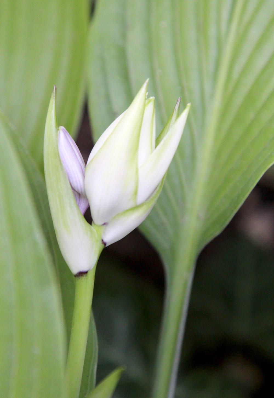 'Okizaki Special' Flower