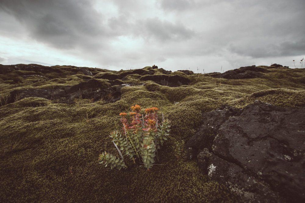 Volcanic Moss Field - Iceland Self Driving Ring Road Road Trip Itinerary