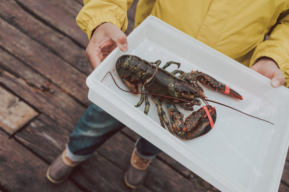 Maine Lobster Boat Tour