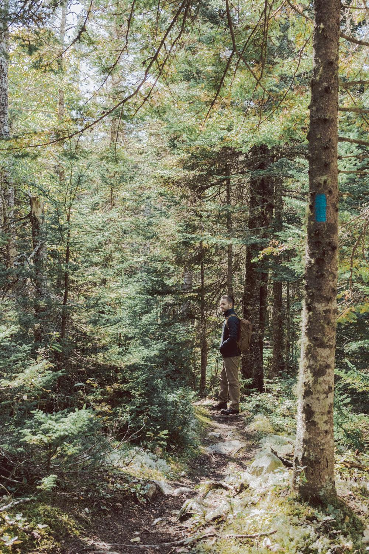 Fairy Head Trail Bold Coast Maine Hike - Things to do in Maine