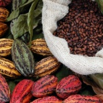 cacao-superfood-150x150.jpg