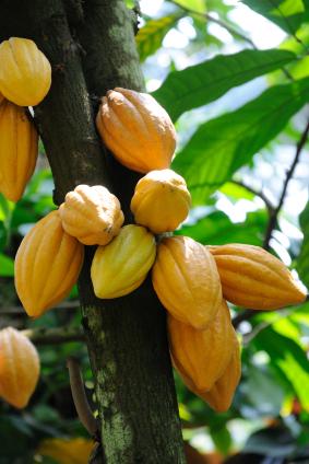 organic-raw-cacao-superfood.jpg