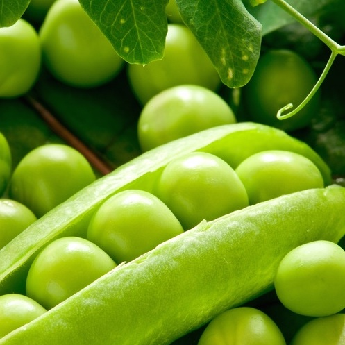 Pea protein is said to be one of the most perfect proteins for human consumption