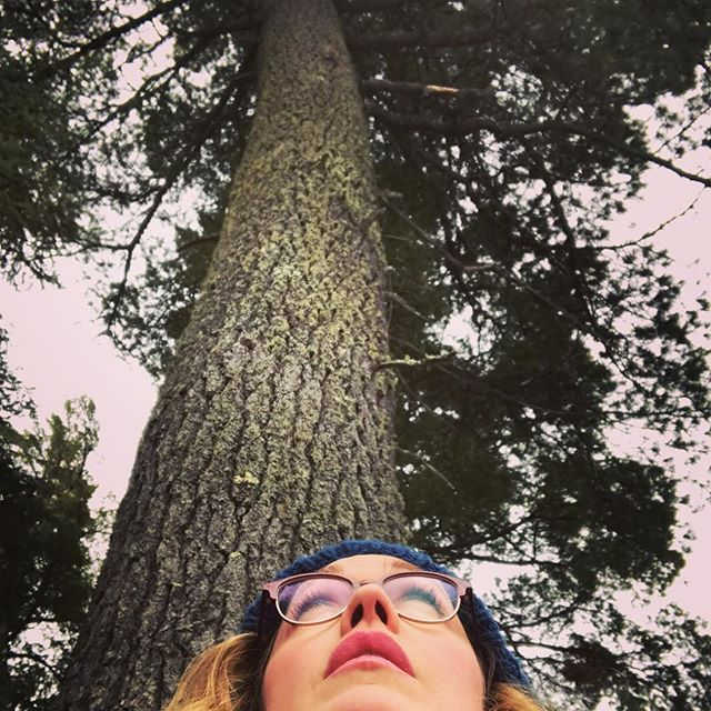 Grandmother White Pine  #elyminnesota #savetheboundrywaters