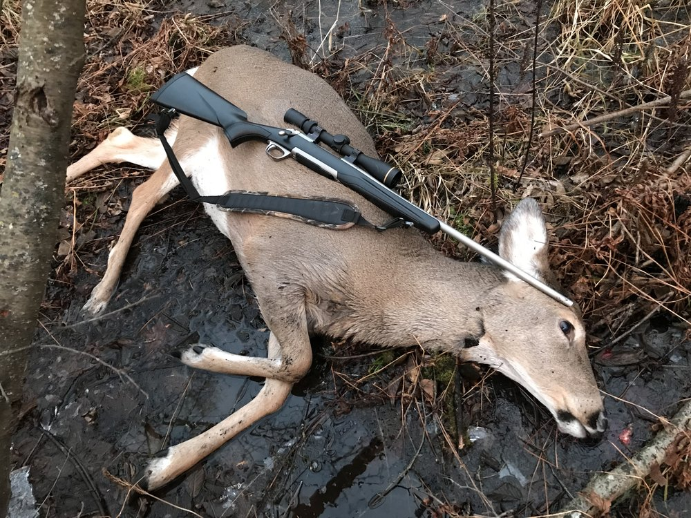 gun-deer.jpg