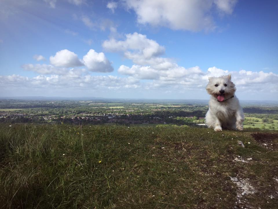 Long walks out on the South Downs with my dog - not a bad way to grow up.
