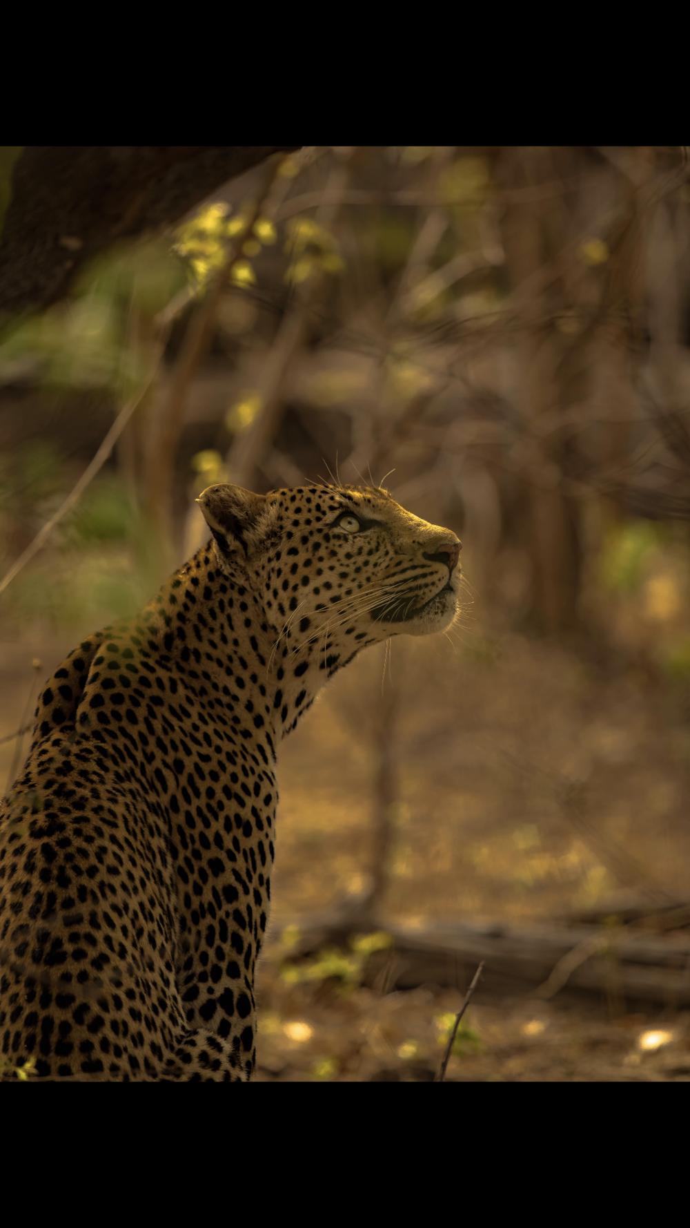 Linyanti, Botswana