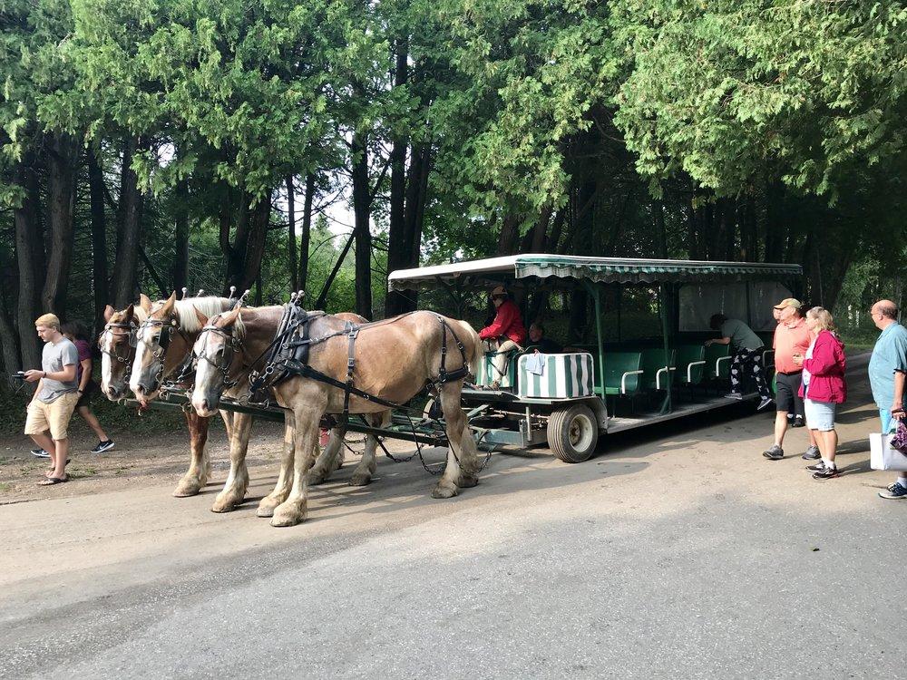 Horse-drawn carriage tour