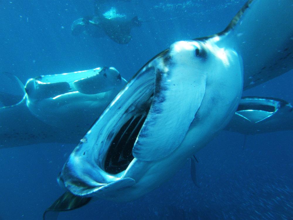 maldives-underwater 146.jpg