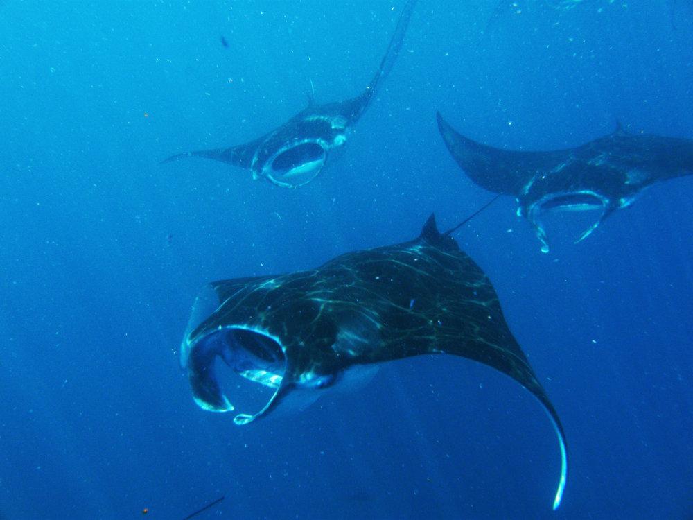 maldives-underwater 170.jpg