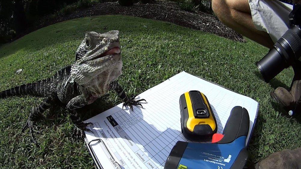 Fieldwork lizard.jpg
