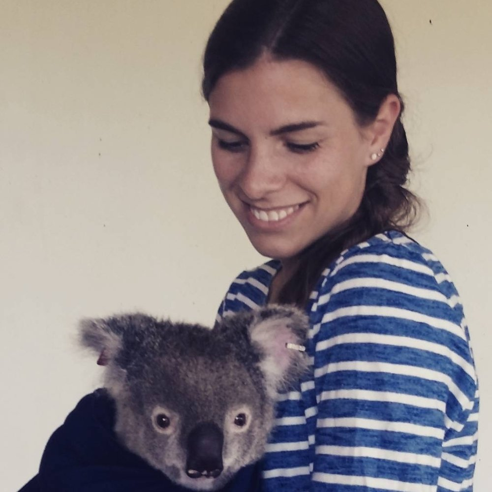 Katrin Hohwieler - PhD candidateM. Sc. (Wildlife Ecology and Management), University of Natural Resources and Life Sciences, AustriaB. Sc. (Biology), University of Freiburg, GermanyProject: Genetic consequences of urbanisation on koalas