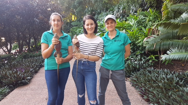PhD candidate Bethan Littleford-Colquhoun, presenter Clare Von Dorssen and Dr Celine Frere in Roma Street Parkland during filming.