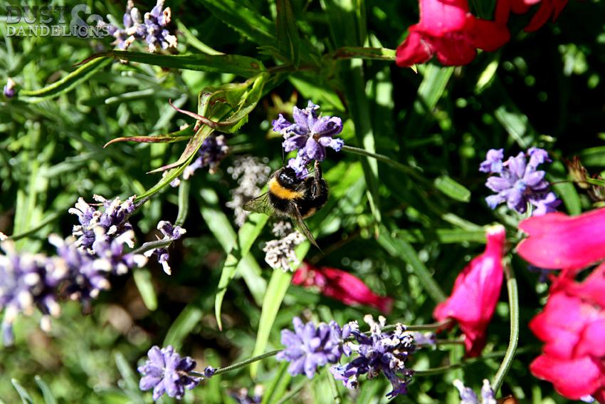 InMYG-10-Bee.jpg