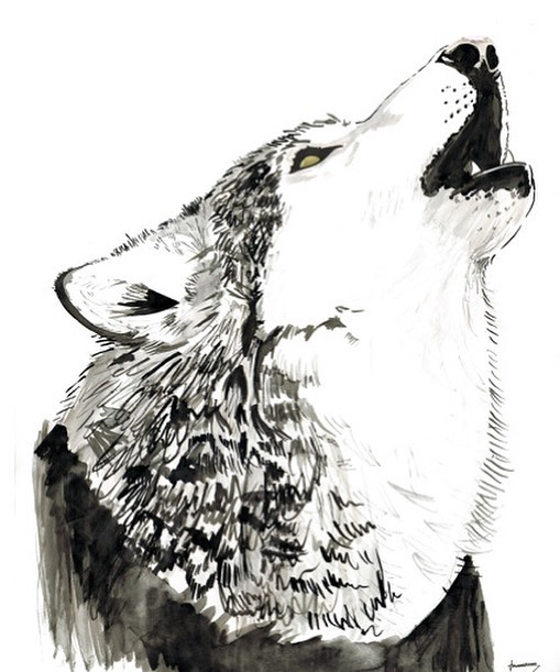Forgot to post this yesterday. Here is an old illustration I did of a wolf 🐺 for my brothers birthday. #throwbackthursday #tbt #illustration #illustrator #painting #ink #dogsofinstagram #wolf #wolftattoo