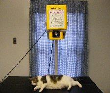 radiograph_cat.jpg