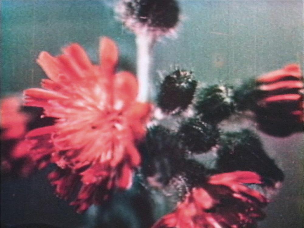 burroughs film flower CU.jpg