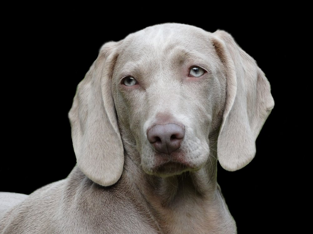 dog-1742295_1920.jpg
