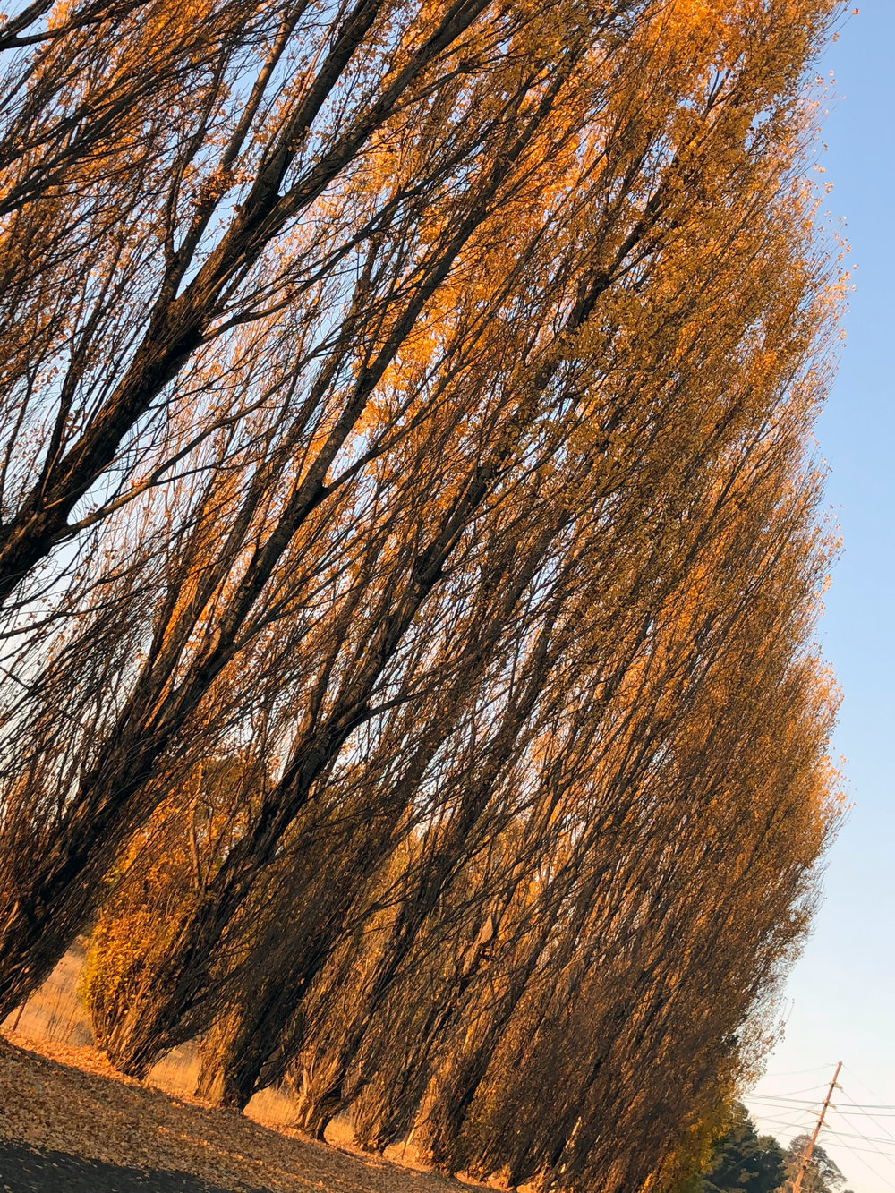 Orange-afternoon-trees.jpg