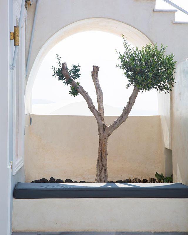 Window to nature.. #photooftheday #photography #oia #springagain #nature