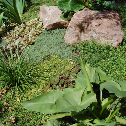 Tapestries of groundcover, form and texture.jpg