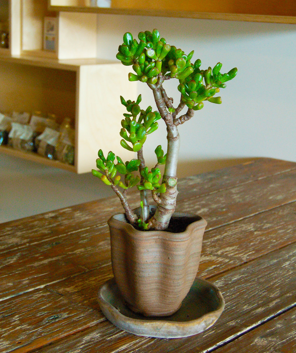 ceramic planter.JPG