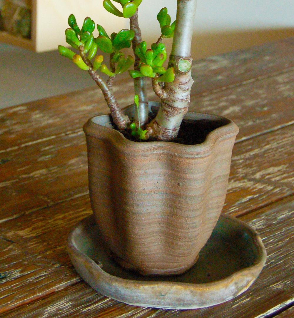 ceramic planter copy.JPG
