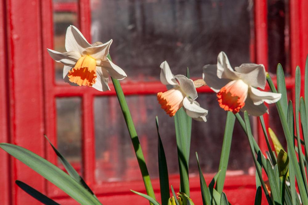 spring-7.jpg