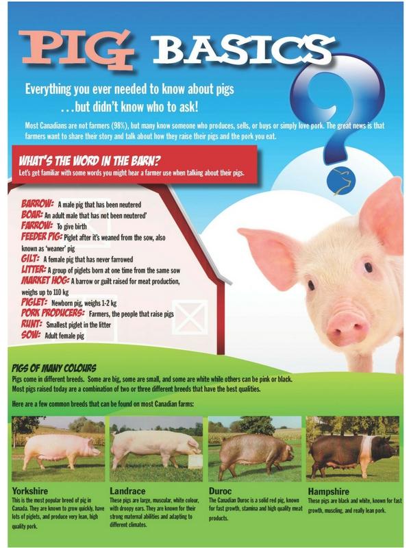 Pig Basics