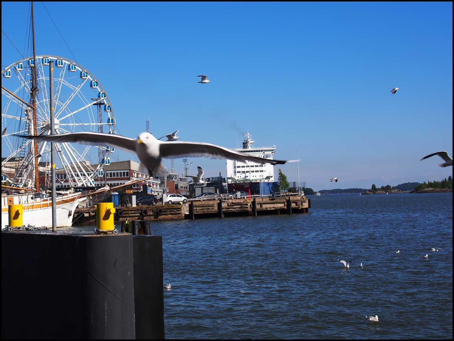 Seagull Scene, Helsinki Harbour
