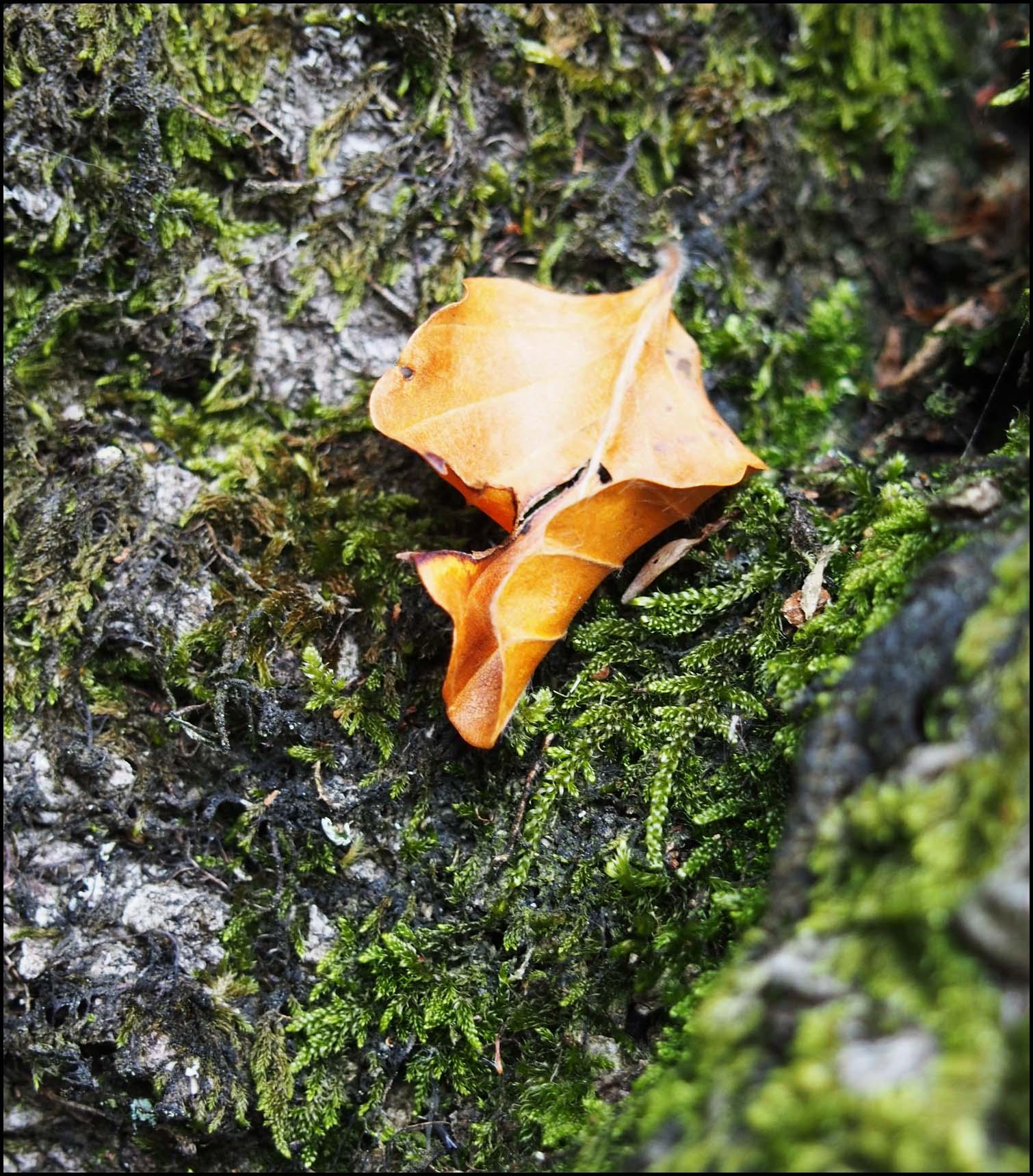 A leaf and moss