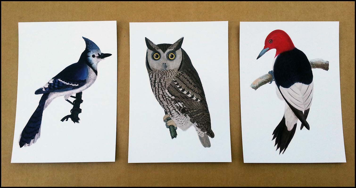 Bird Print Postcards