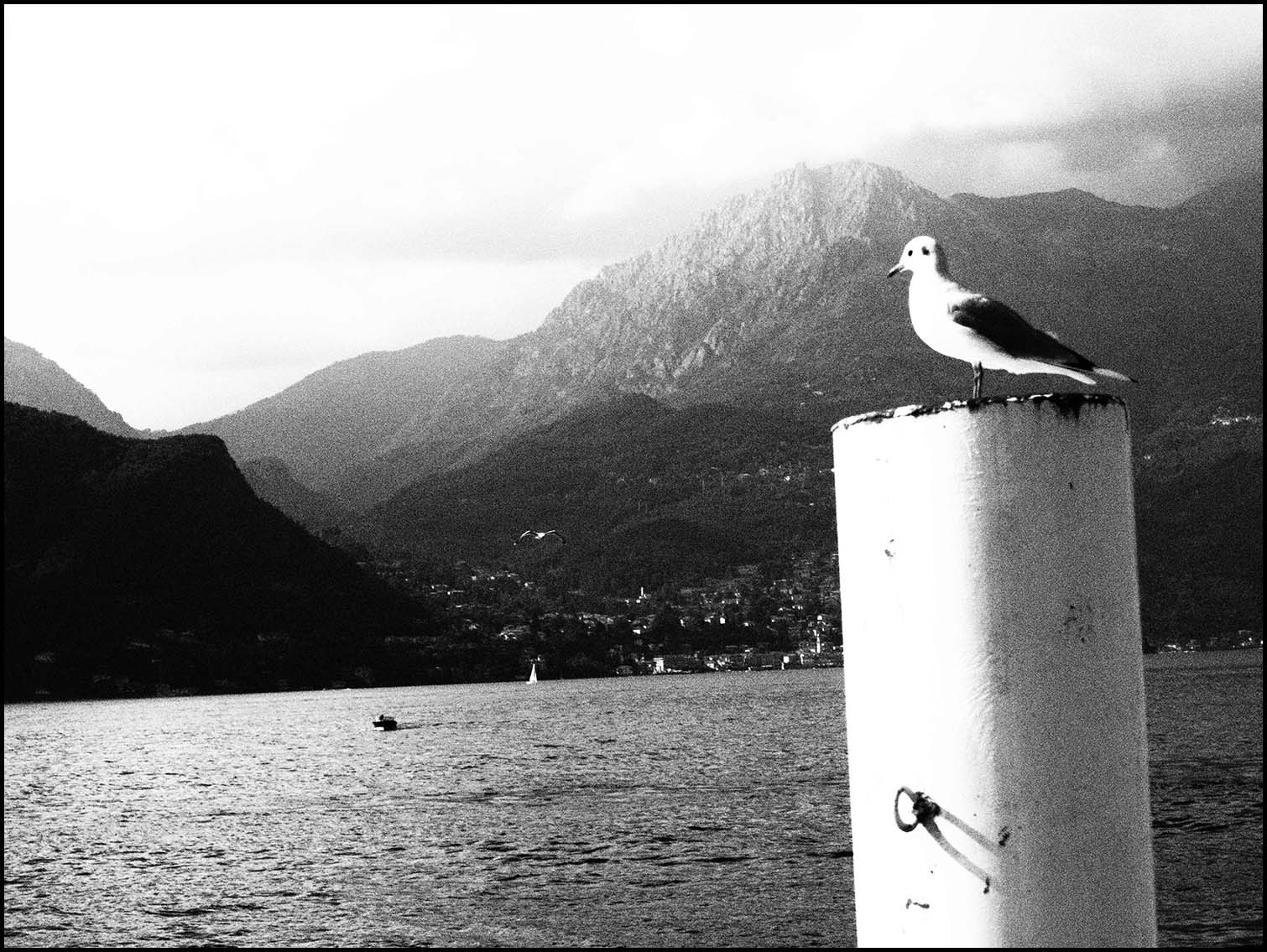 Pigeon in Bellagio