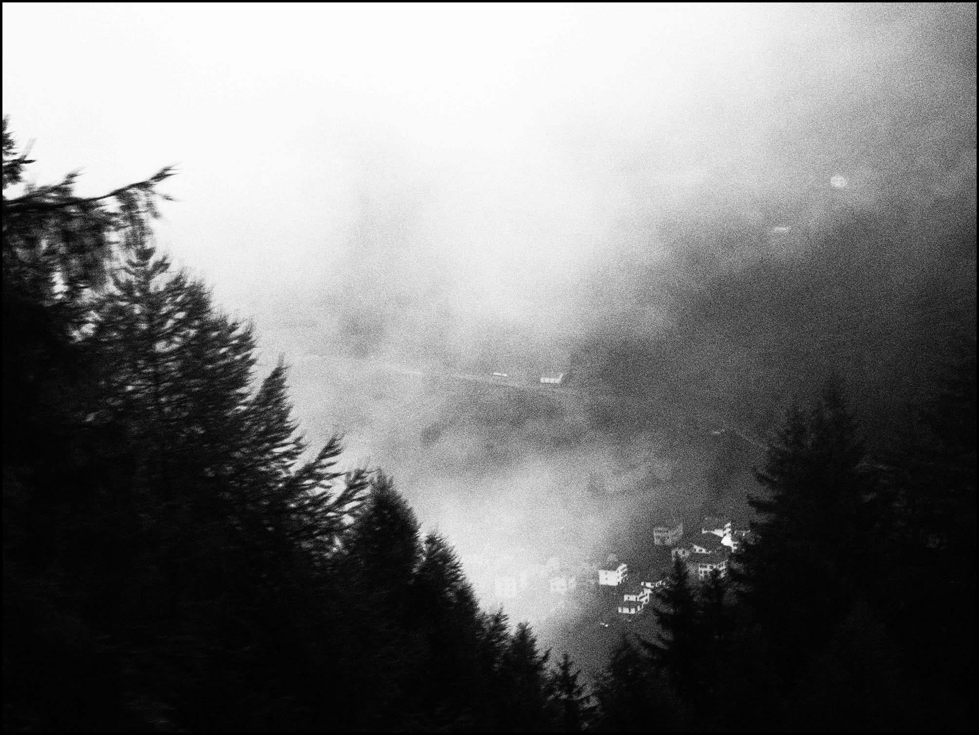 Misty, atmospheric trees, Switzerland