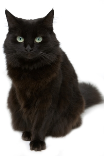 Nousha the cat