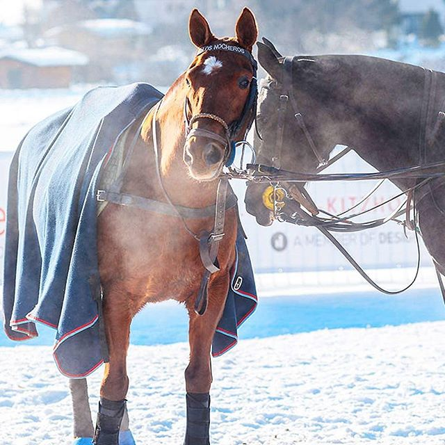 What would Snow Polo in @kitzbuehel_tirol be without our beloved Polo Ponies? Have a nice week!  #snowpolo #kitzbühel #snow #polo #kitzbuehel #polopony #poloponies #pololifestyle #poloplayer #tournament