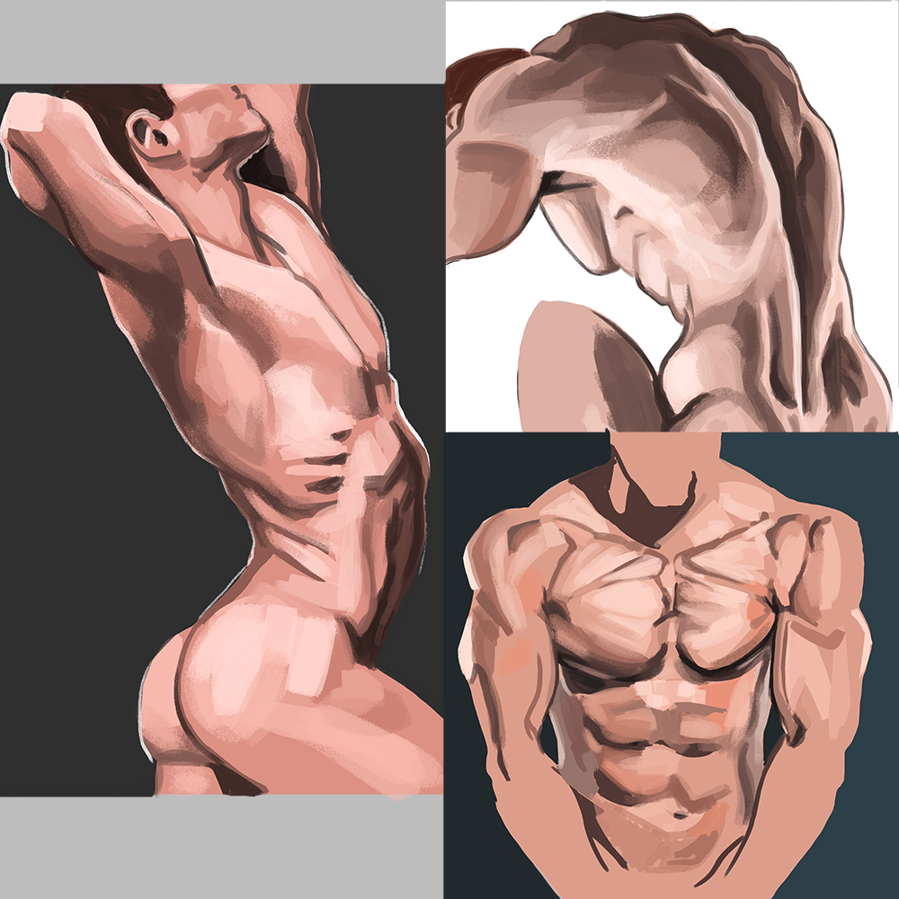 MS Male torsos hl.png