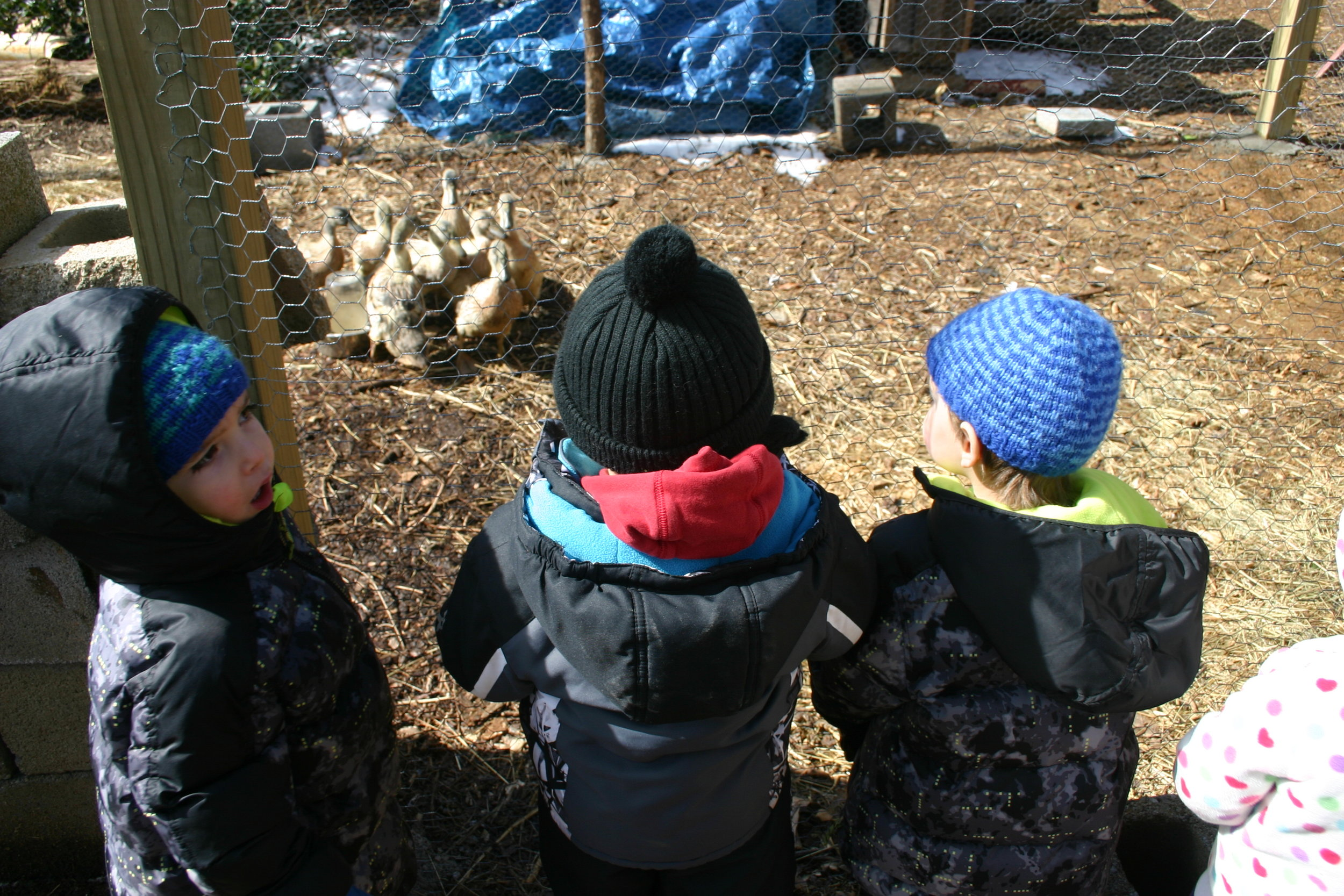 children watching the duck eat boiled potatoes for treat