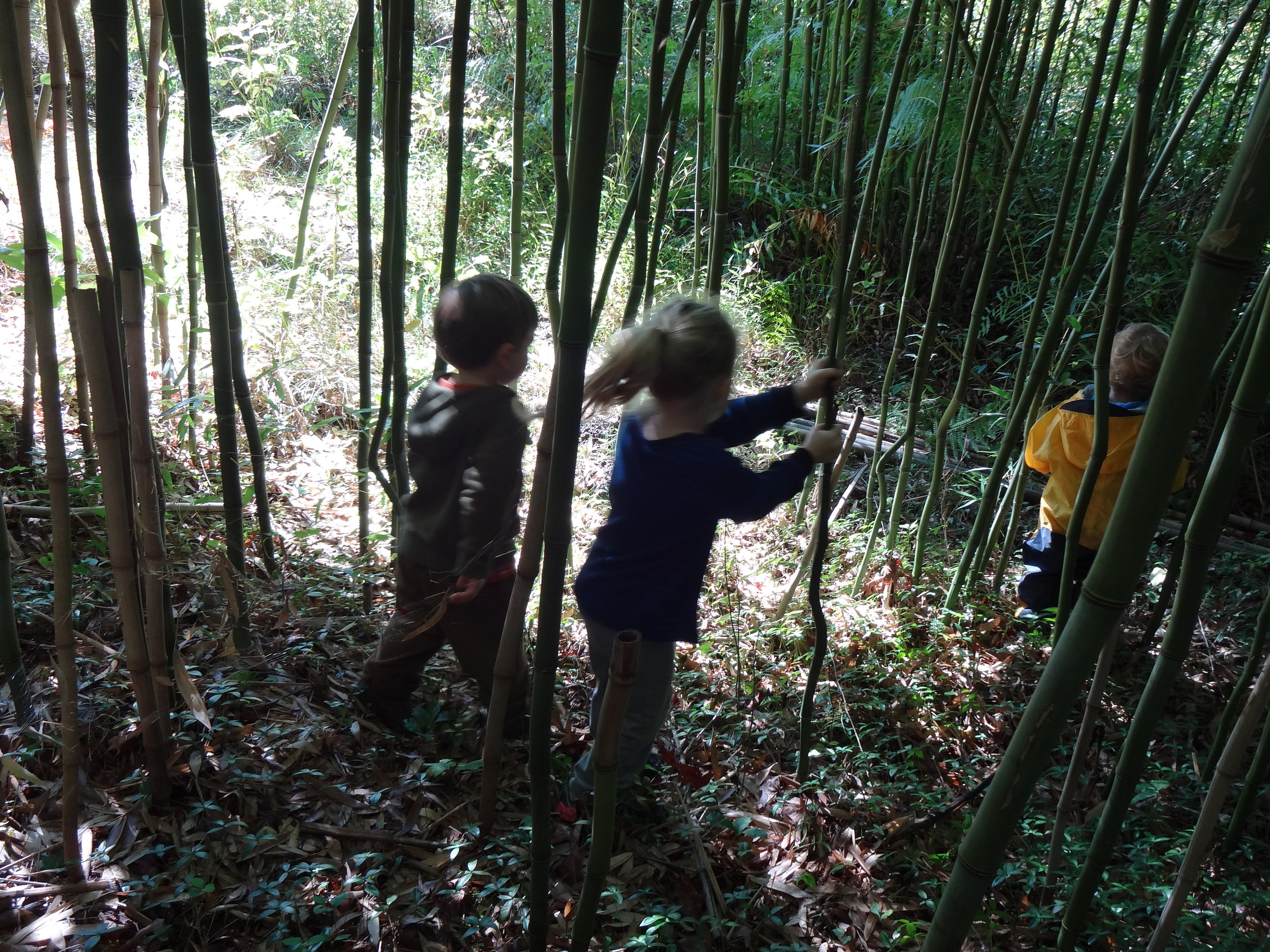 Bamboo forest is so cool and beautiful.  We enjoy walking through them on Wednesdays and Fridays.