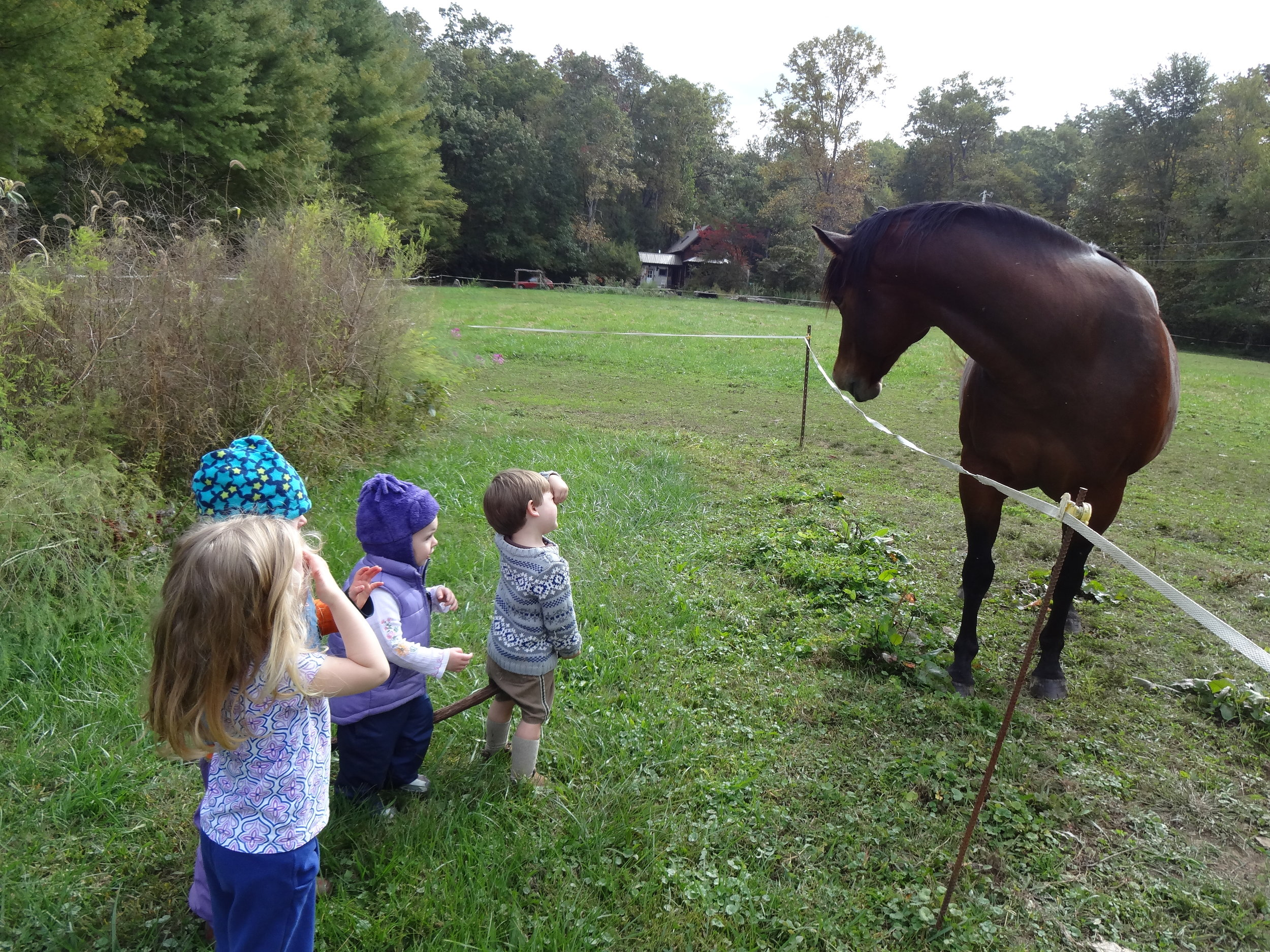 We get to say hello and give left over snack apples to horses.  We found that horses like to eat pears also!