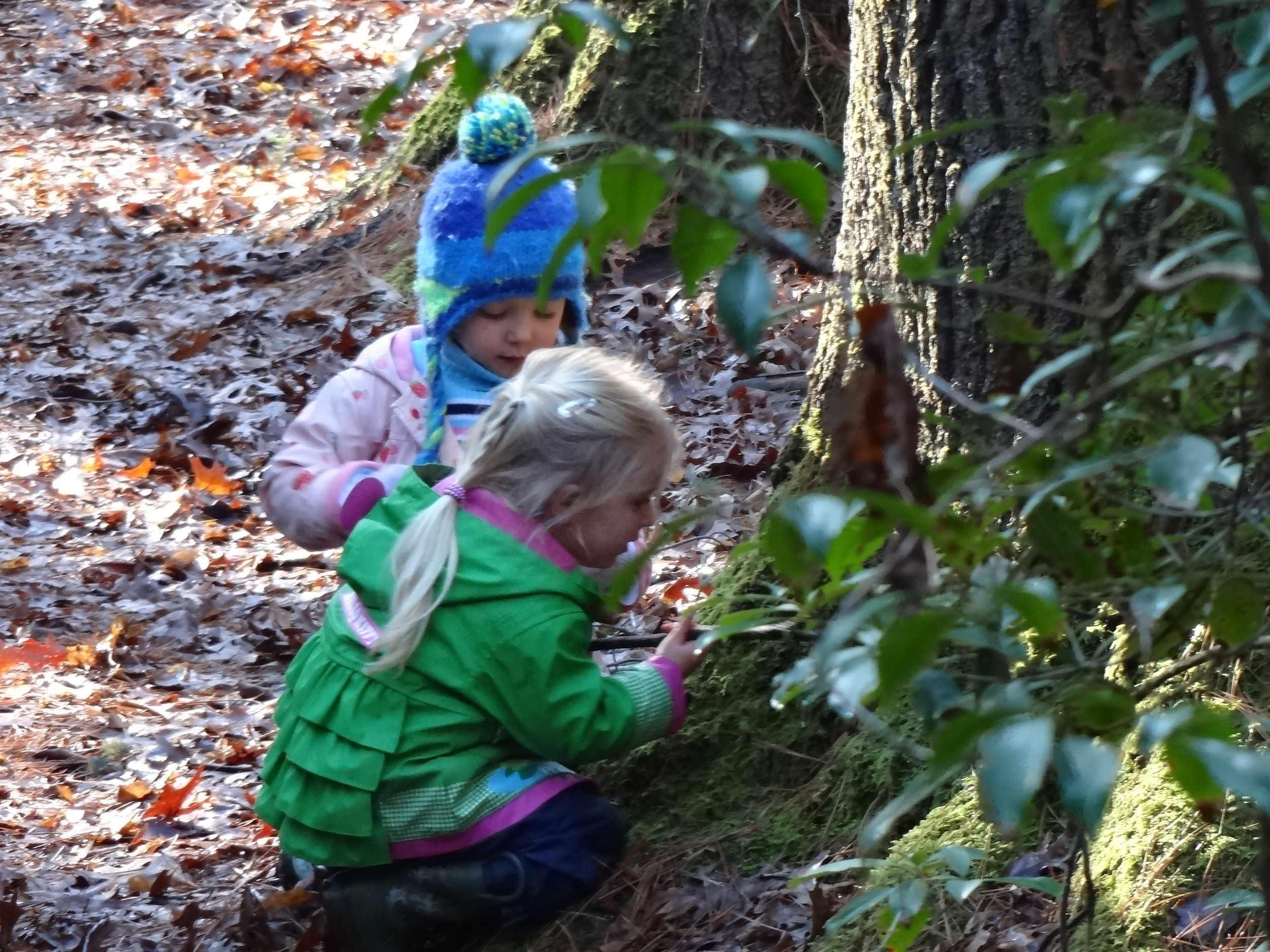 Girls found bubbly foam at the base of a hemlock tree.