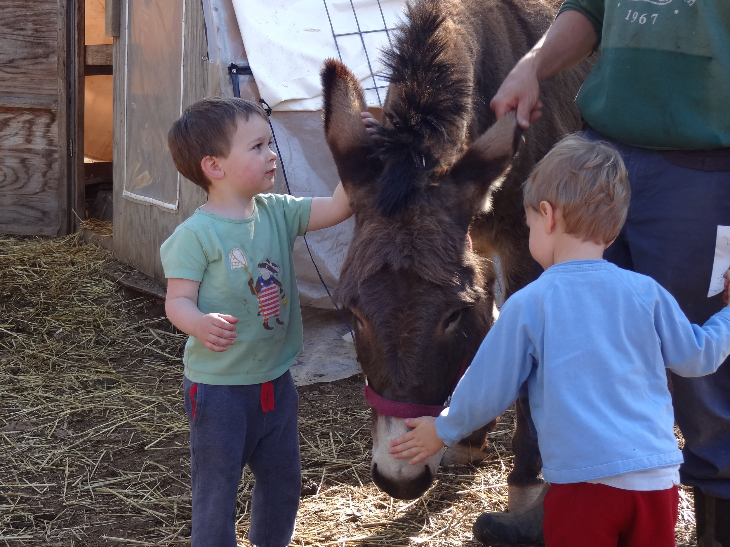 Children enjoyed petting Lulu, the donkey