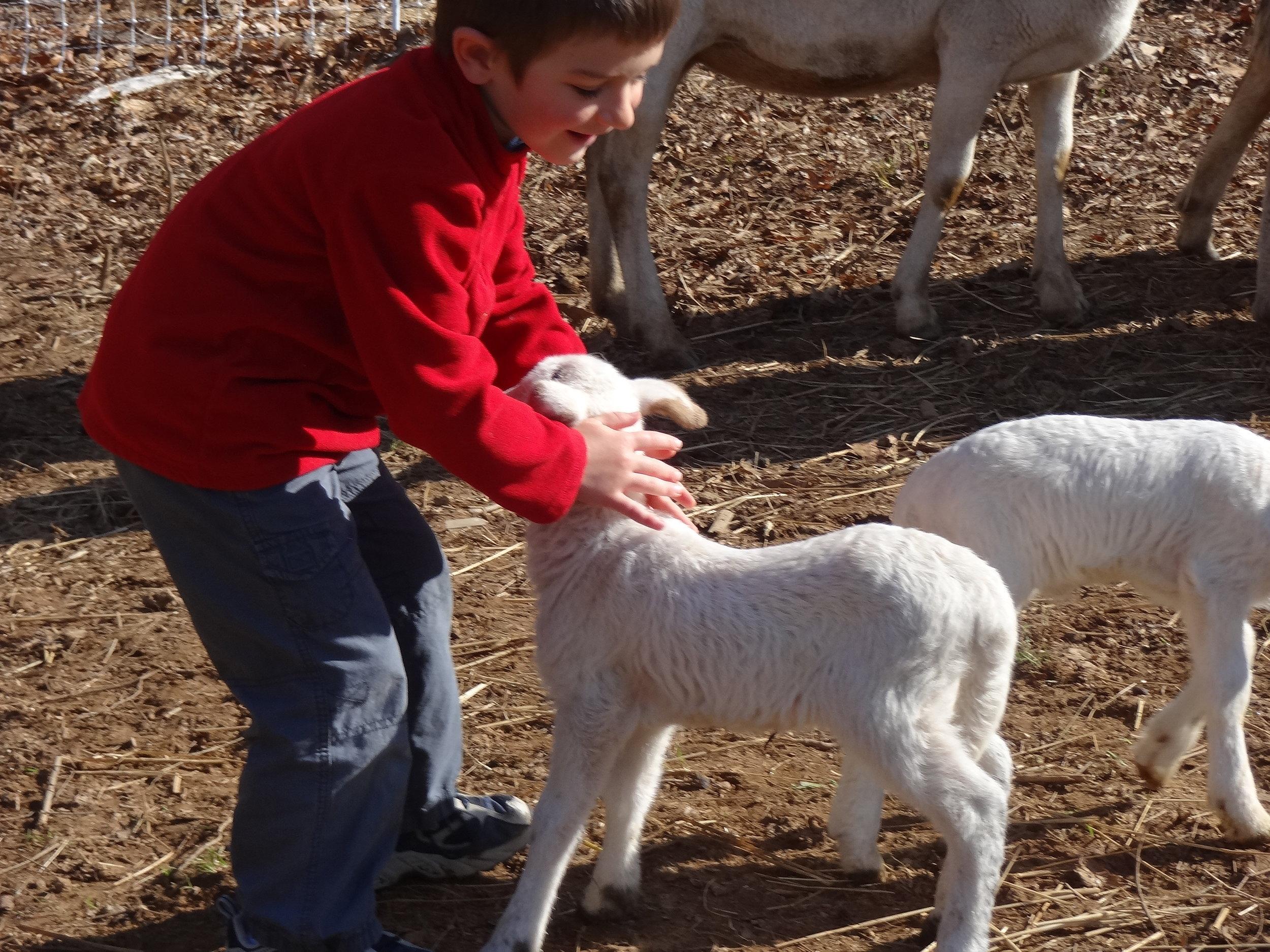 David adores a lamb
