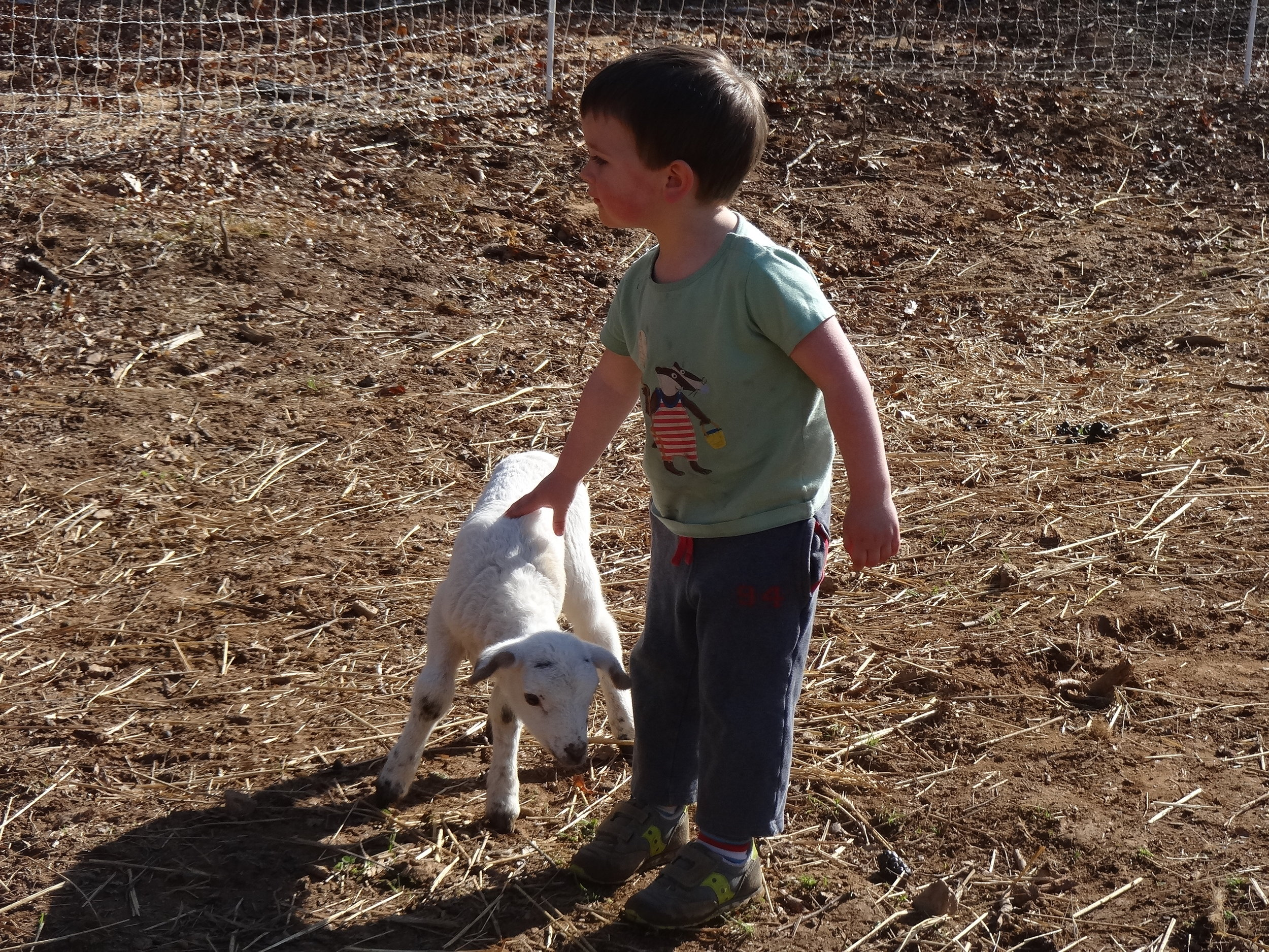 Mattias says hello to a lamb