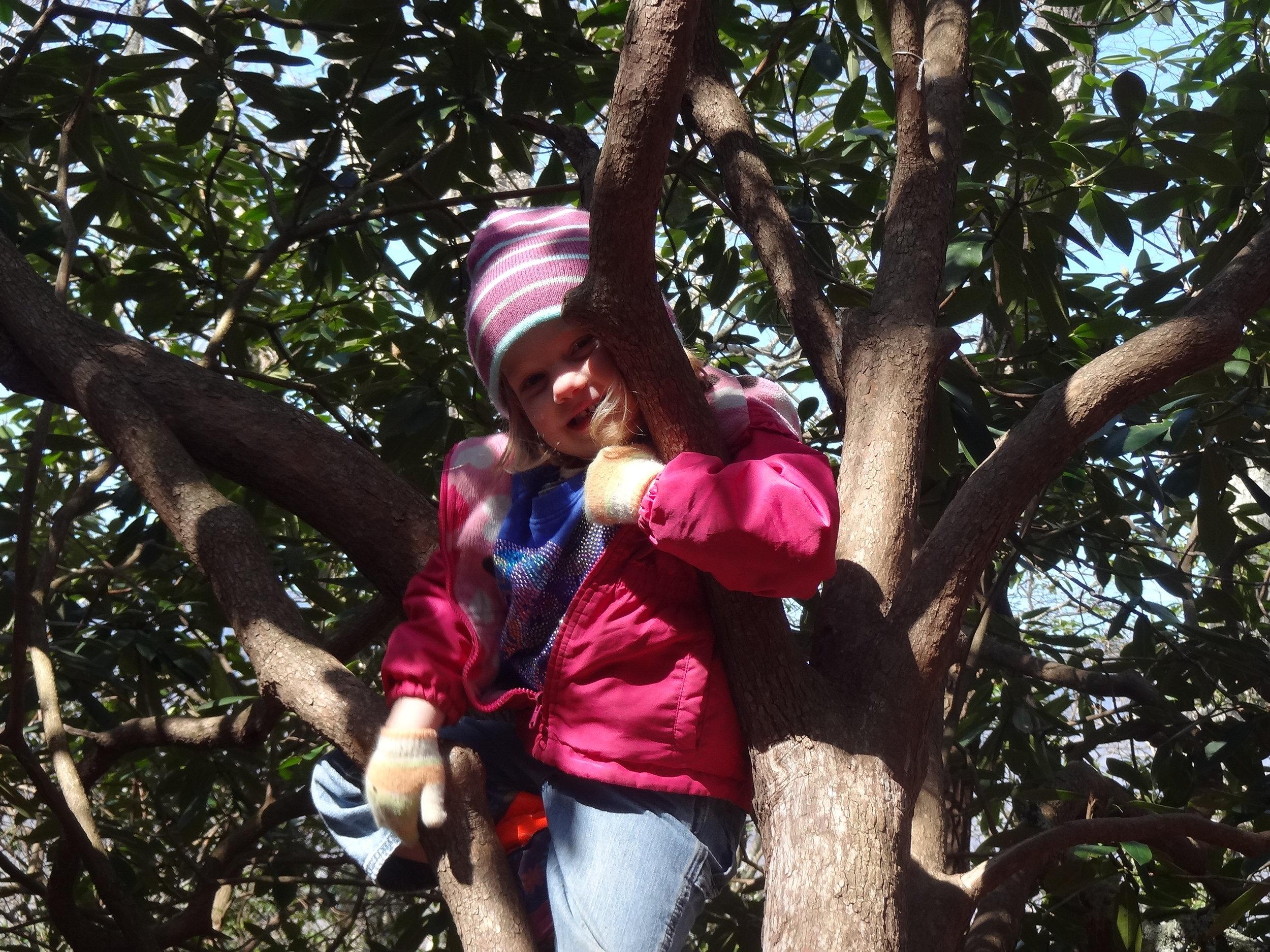 "Vera climbing a ""climbing tree"""