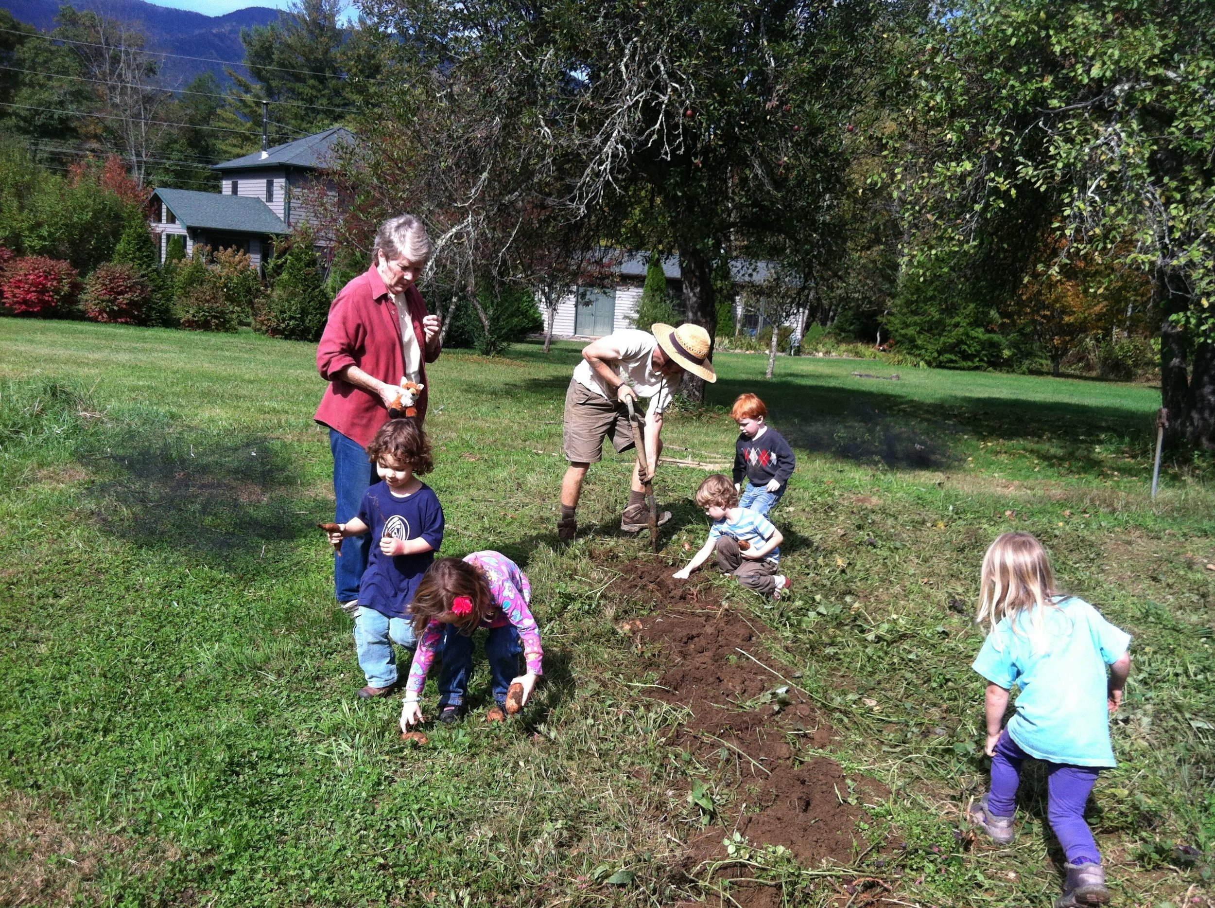 the children work joyously at harvesting sweet potatoes