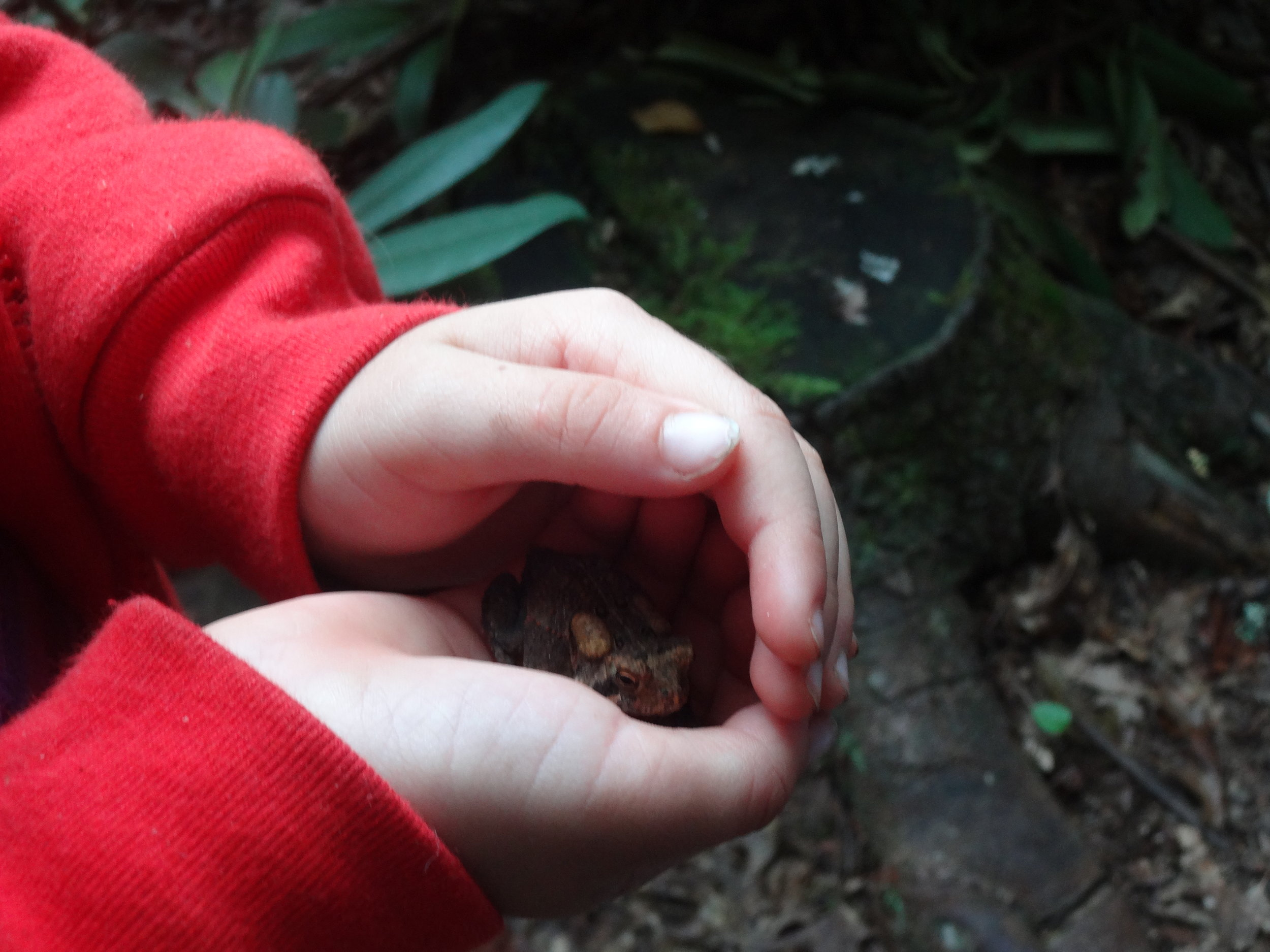 Hello, a little toad friend!