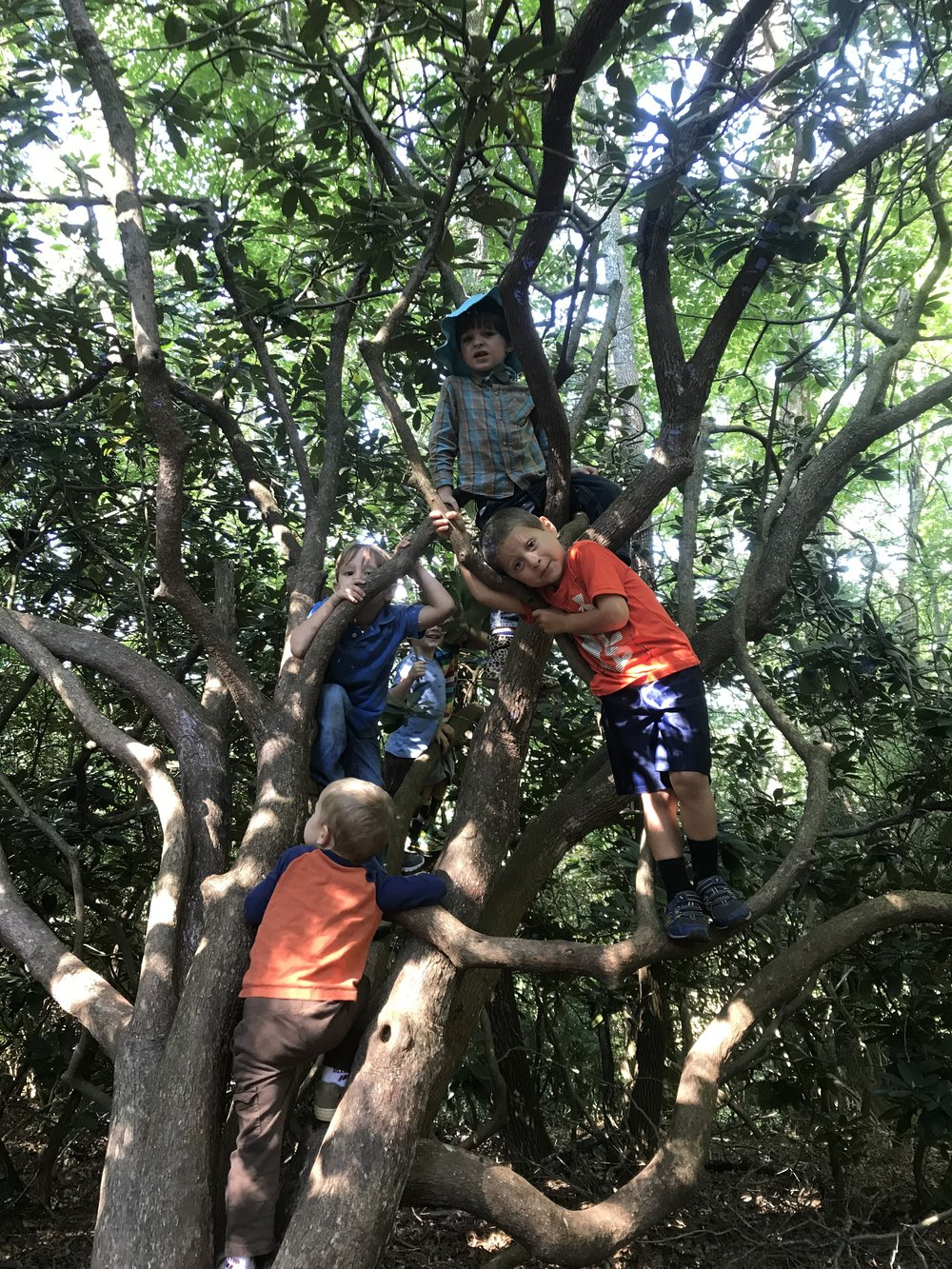 Children at the Climbing Tree.