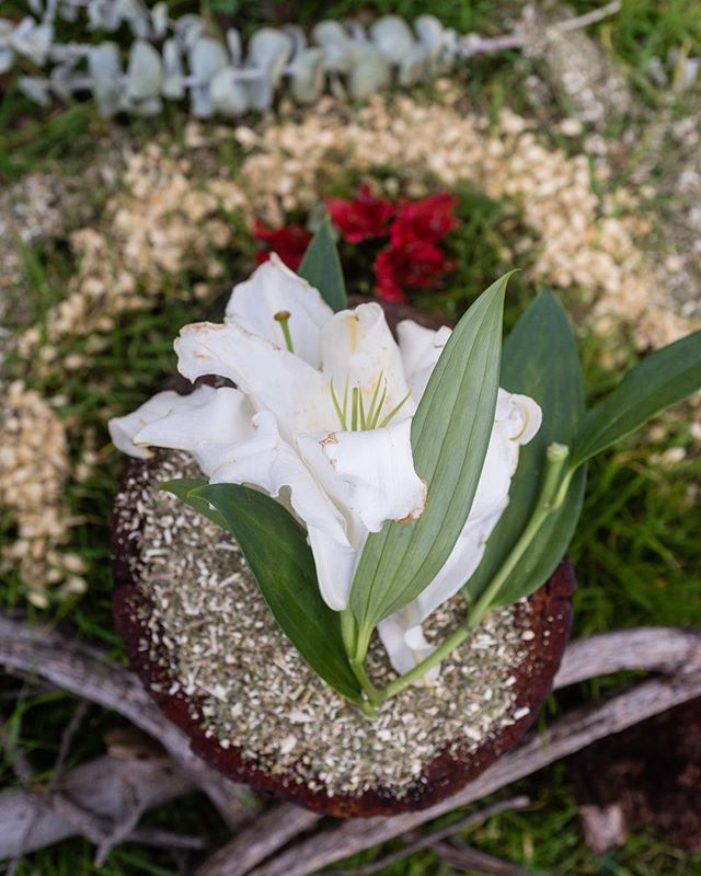 Flores para Pachamama, Imbolc 2019 . . . #brigid #arawakdeirlanda #irisharawak #fortheancestors #community #prayerismagic